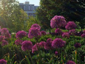 Flowers in Turner Park